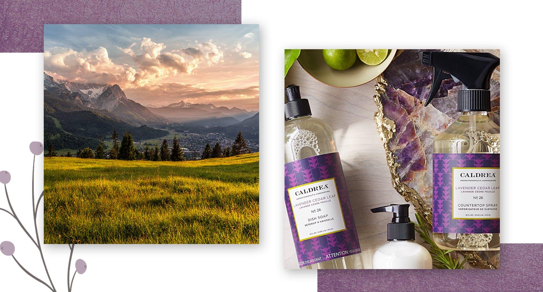 Lavender Cedar Leaf1