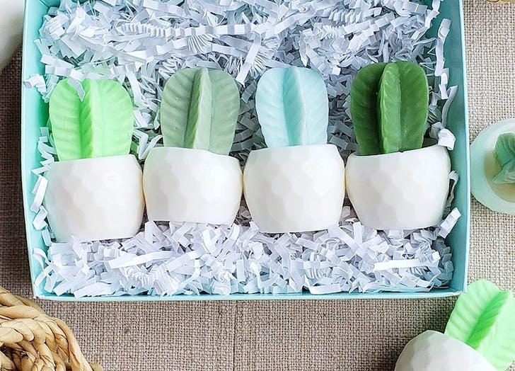 cactus soap