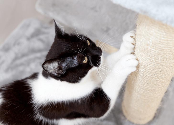 cat scratching a post