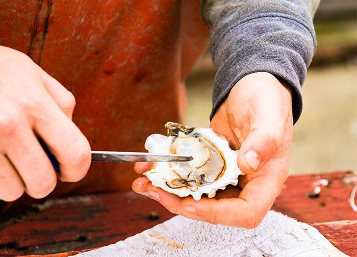 peeko oysters cat