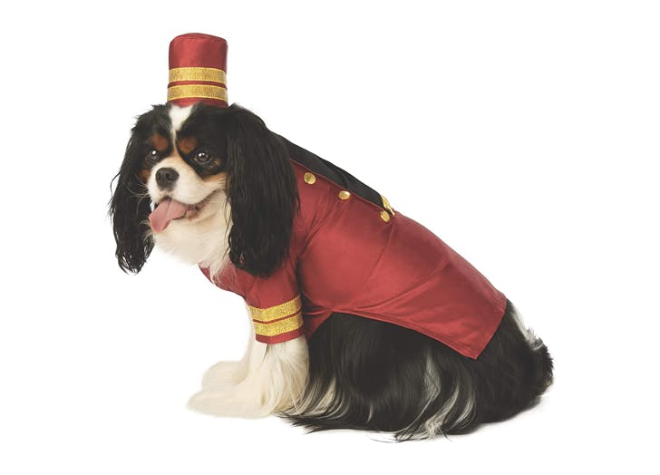 bellhop cat dog halloween costume