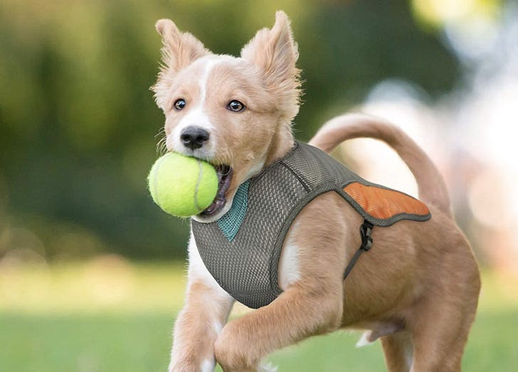 The 9 Best Dog Cooling Vests 2020 - PureWow