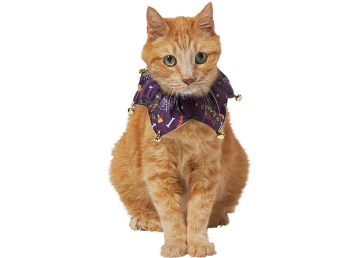 court jester cat halloween costume
