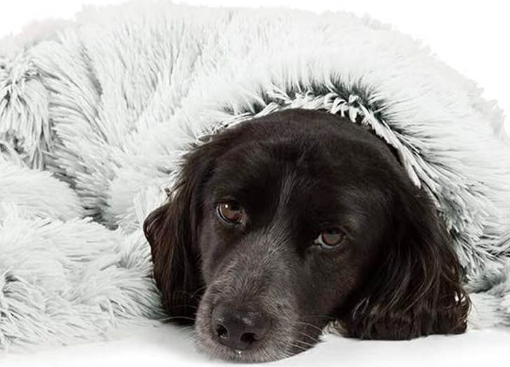 25 Products to Calm Your Dog – PureWow