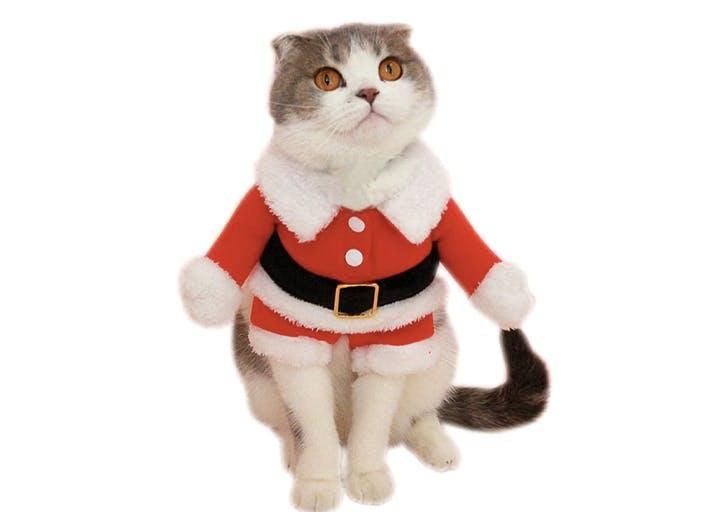 santa cat halloween costume