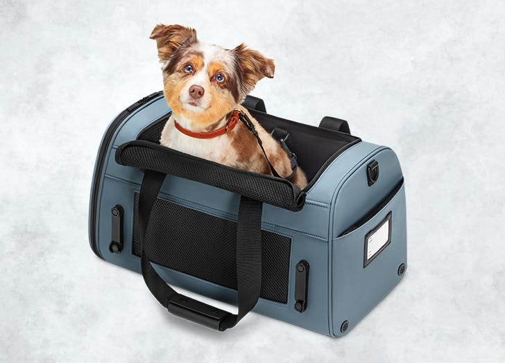 Away Just Launched a Pet Carrier So Fido Can Travel In Style Just Like His Human