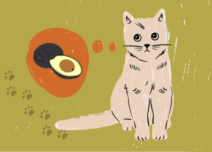 Can Cats Eat Avocado? (Cause Mr. Wiggles Is Eyeing My Avo Toast)