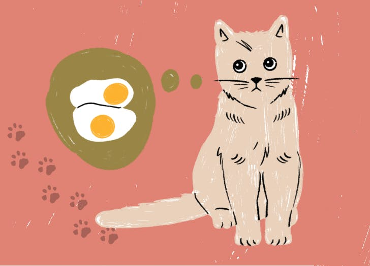 Can Cats Eat Eggs? (Hopefully, Because Mine Just Did)