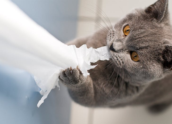 Why Is My Cat Shredding All My Toilet Paper?