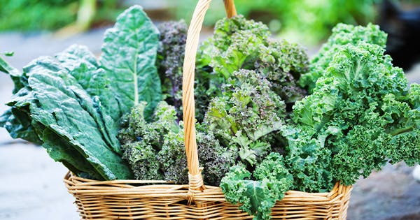 The 10 Best Fall Vegetables to Plant in Your Garden