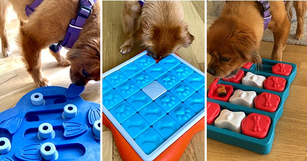 Nina Ottosson Dog Puzzles Have Saved My Pup from Boredom & Separation Anxiety During Quarantine