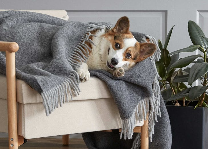 best throw blankets cat