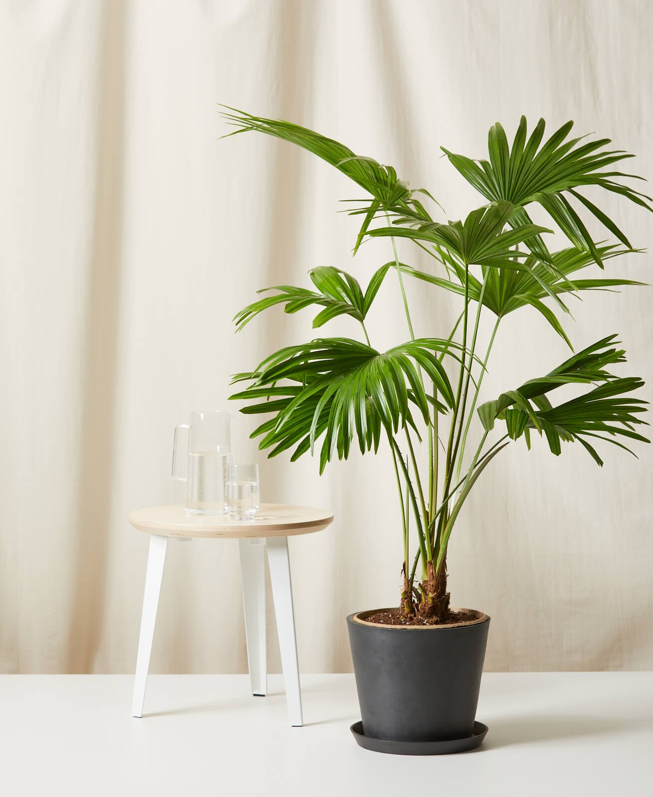 28 Cat Friendly Plants Safe For Your Furry Friend Purewow
