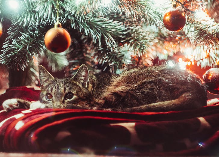 christmas tree cat safety advice