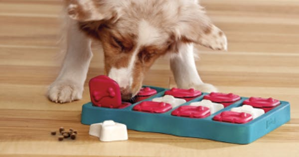 12 Random but Amazing Dog Products PureWow Staffers Discovered on Amazon