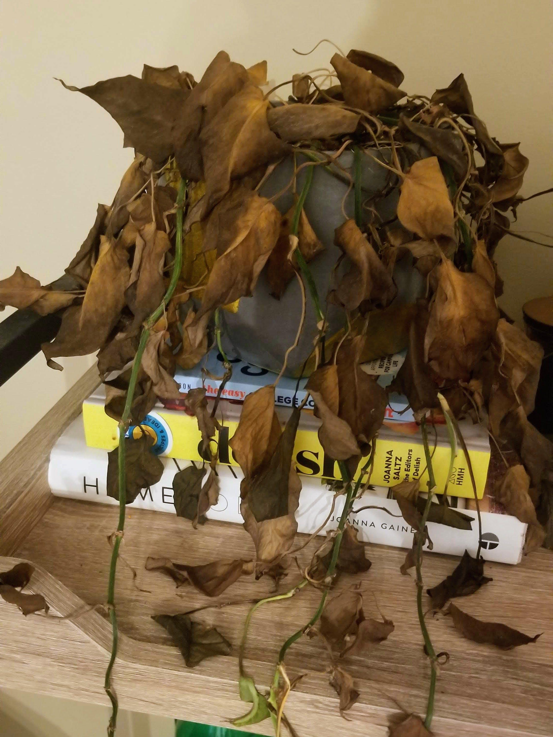 return after quarantine dead plants