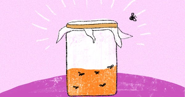 Try This DIY Fruit Fly Trap to Get Rid of Those Pesky Insects Once and for All