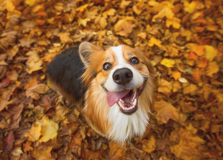 Are Acorns Bad for Dogs?