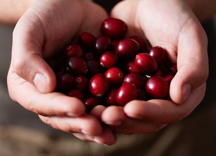 Can You Eat Raw Cranberries? (Aka What to Do with Those Red Gems Once the Sauce Is Made)
