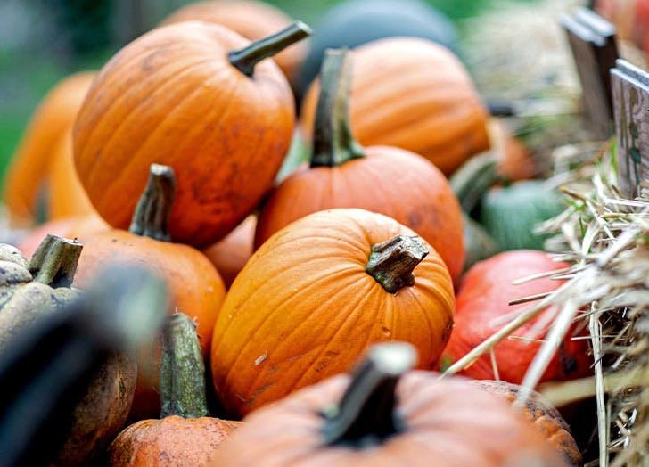 is pumpkin a fruit1