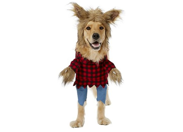 40 Funny Dog Halloween Costumes For Your Pup 2020 Purewow