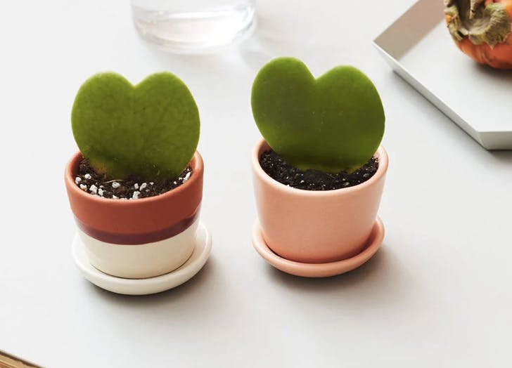 gifts for plant lovers 1