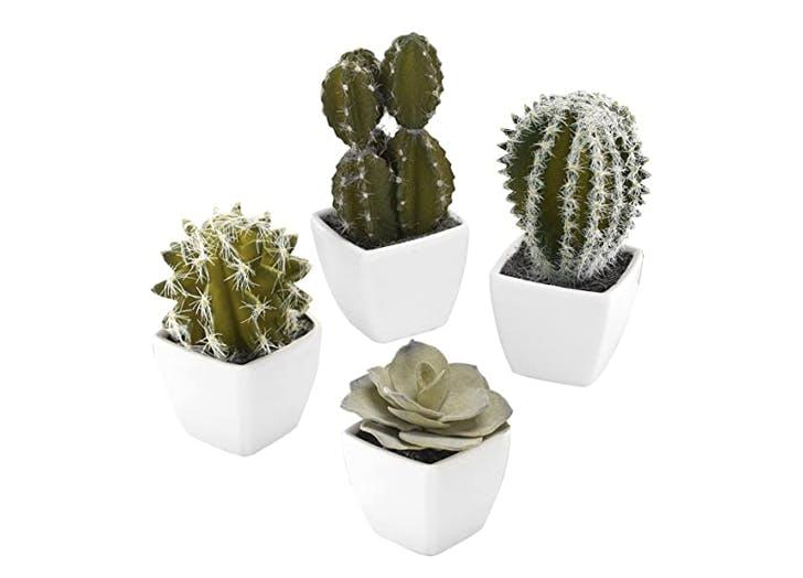 succulents  virtual secret santa gift ideas