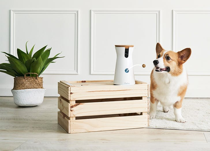 The Furbo Pet Camera (That Tosses Treats At Your Pup) Is Almost 50 Percent Off Right Now