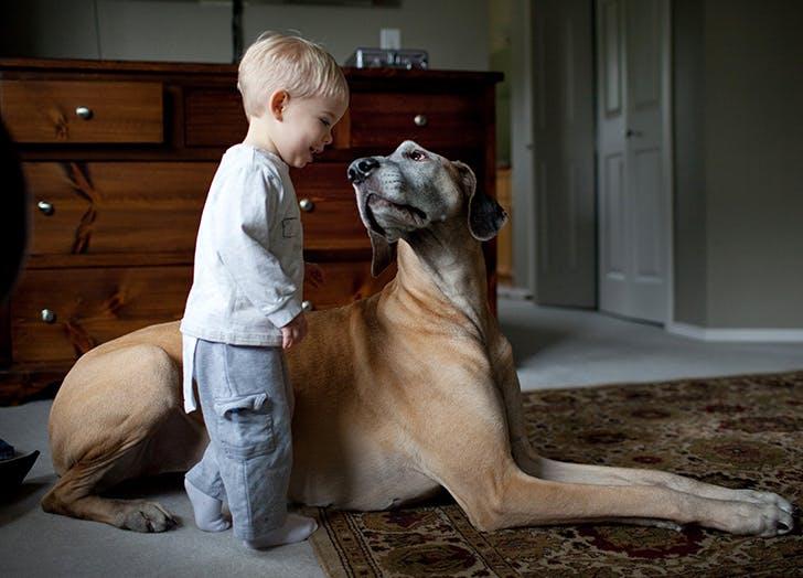 21 Calm Dog Breeds to Keep You Company - PureWow