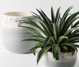 repot plant 1
