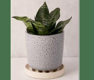 repot plant 2