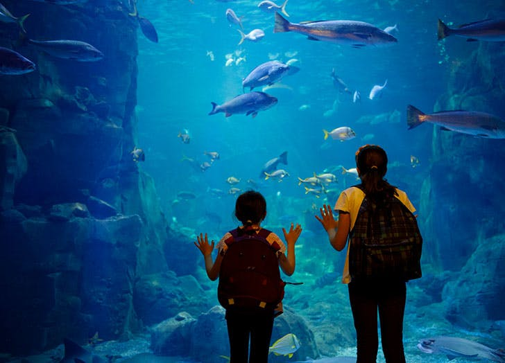 virtual activities for kids visit aquarium