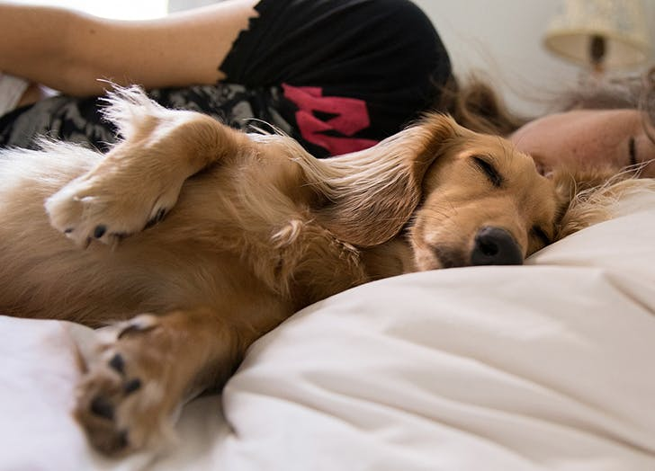 What Do Dogs Dream About? (And Are They Thinking of You?)