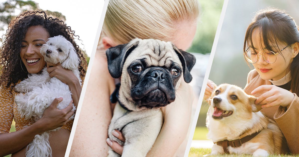 20 Affectionate Dog Breeds Because Puppy Love Is Just the Best