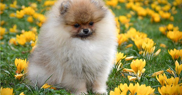 25 Fluffy Dog Breeds That You'll Want to Pet All Day Long