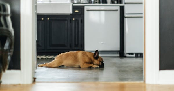 How to Put a Dog Bed in Your Kitchen (Without Tripping Over It Every 5 Seconds)