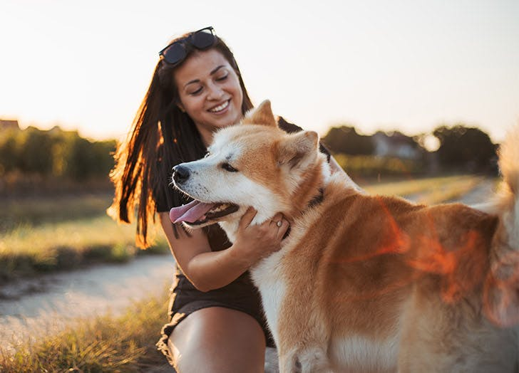 affectionate dog breeds akita