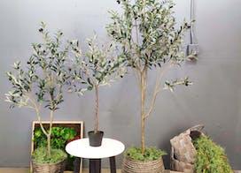 etsy olive tree hero