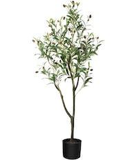 olive tree amazon