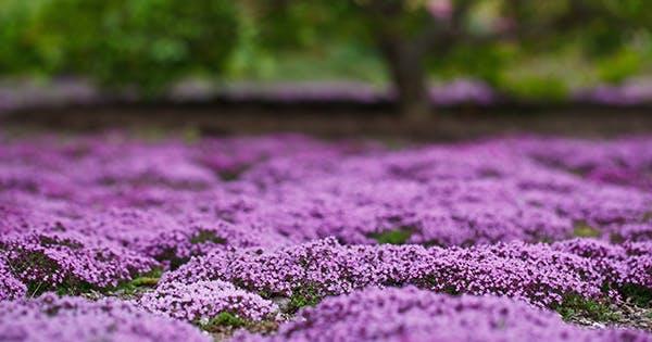 Garden Nirvana  - cover