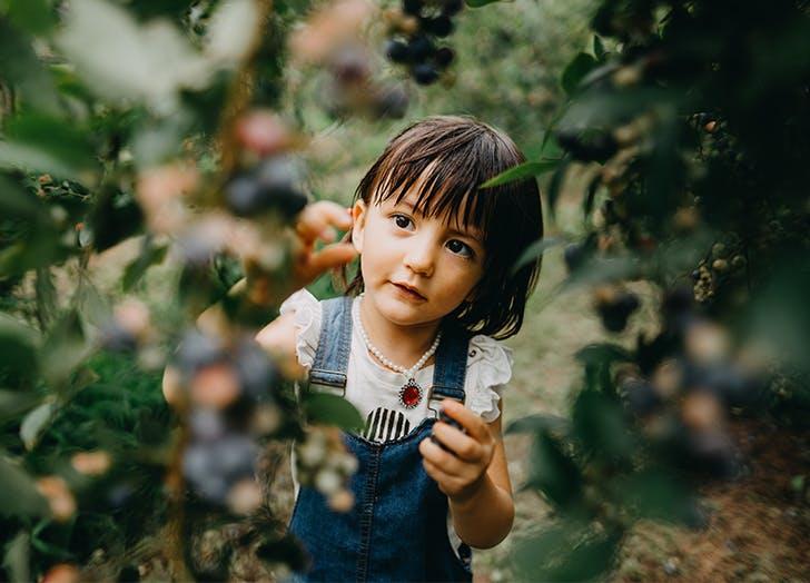 Outdoor Activities for Kids   Fruit Picking