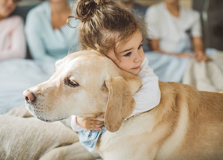 The Best Dogs for People with Autism   LABRADOR RETRIEVER