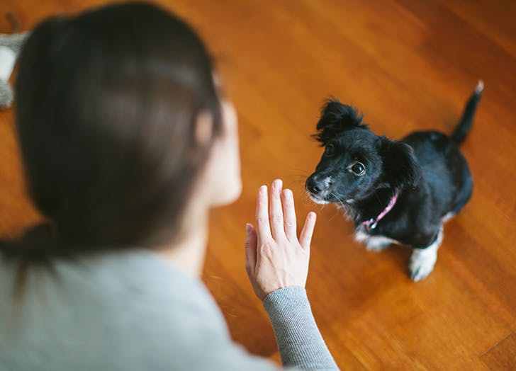 5 Things to Stop Saying to Your Dog, According to Trainers & Vets