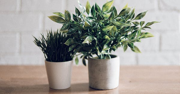 The 20 Best Air Purifying House Plants to Freshen Up Your Home