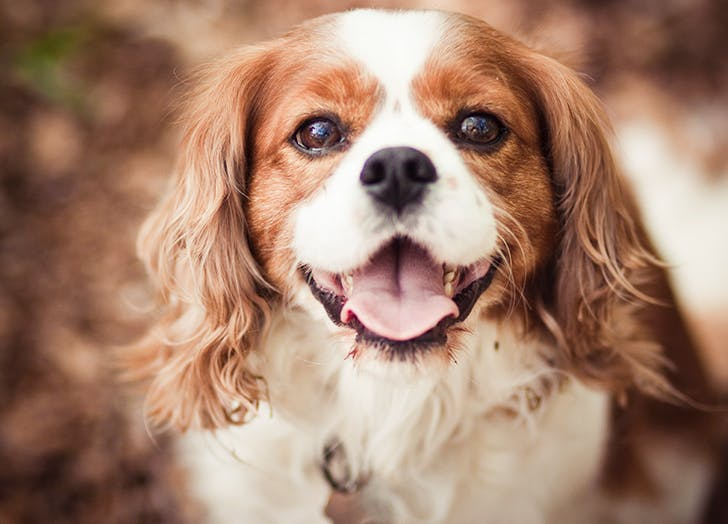 This Is the Single Best Dog Breed for Renters