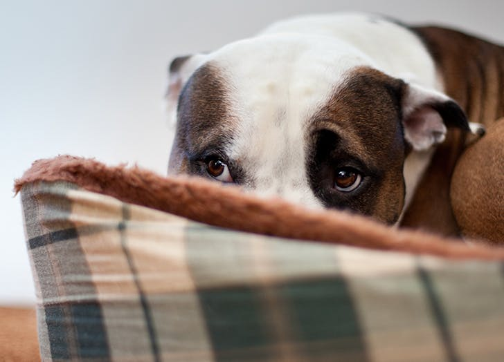 The One Tip You Need to Reacclimate Your Dog to Society After Being Inside All Year