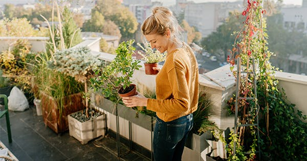 15 Great Balcony and Patio Plants to Grow Outdoors