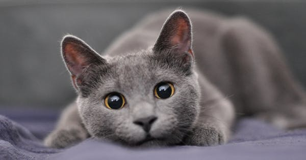 11 Best Cat Breeds for Apartments (Because Not All Cats Are Fit for Small Spaces)
