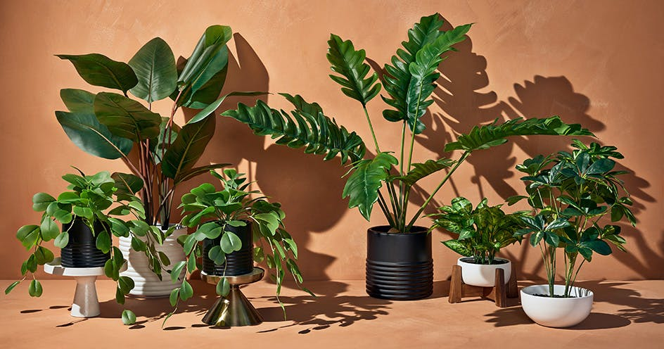Target's New Faux Plants Look So Realistic You'll Accidentally Water Them
