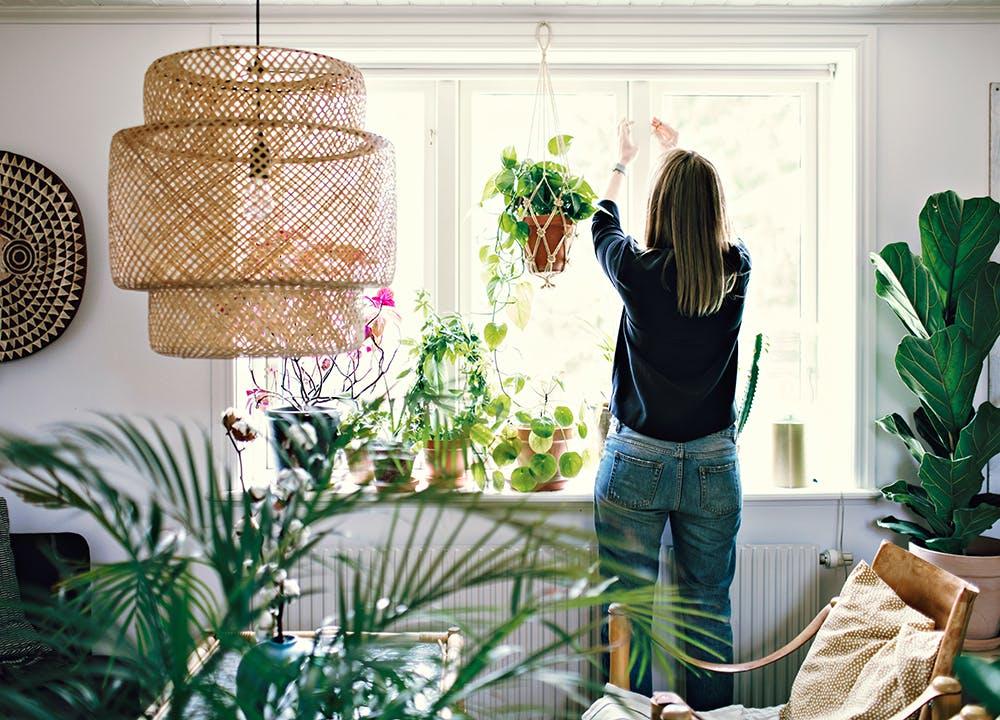 getaway gardens window